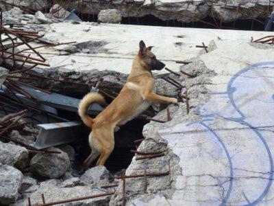Finn in den Trümmern